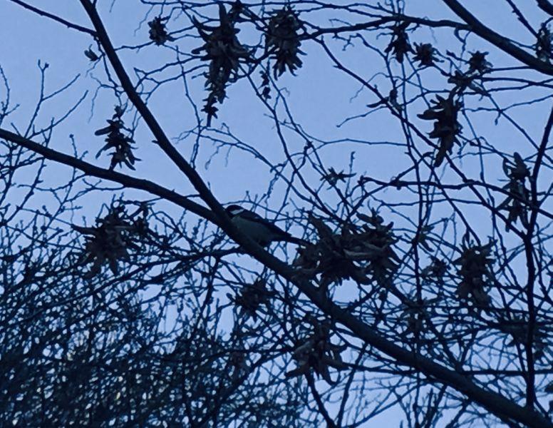 Vogel-im-Baum